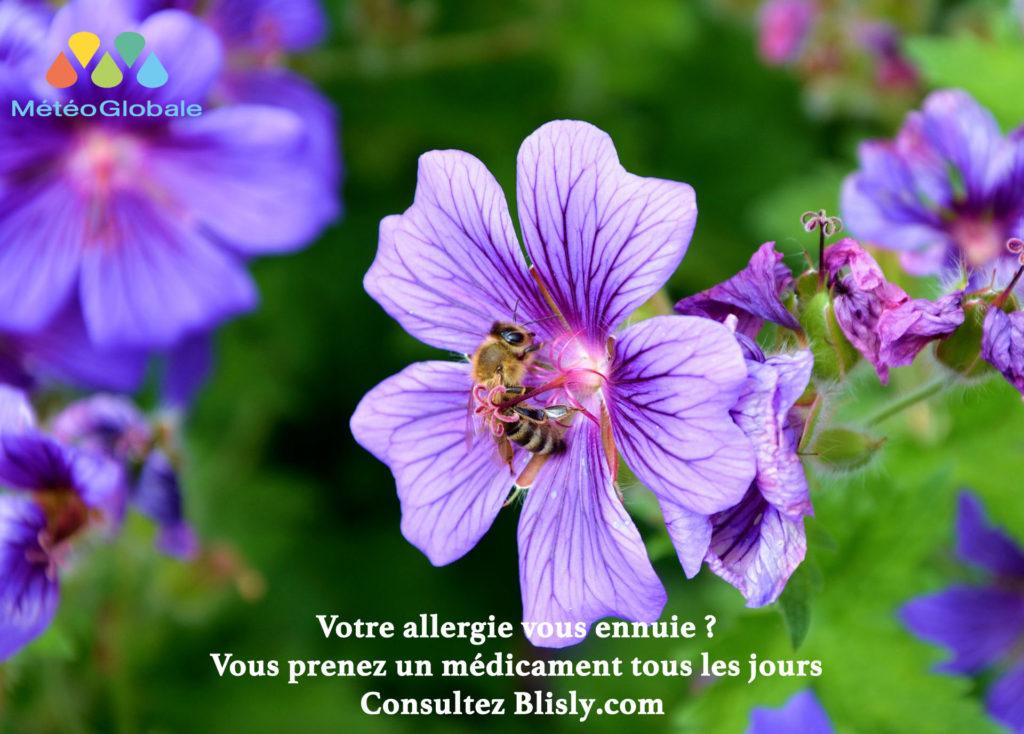 Saison des pollens = médicaments?