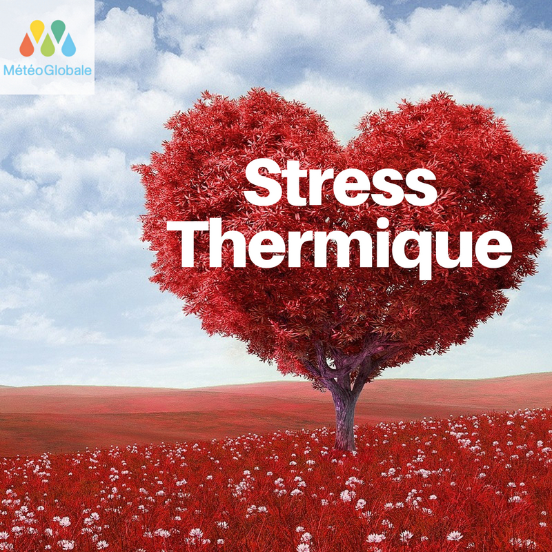 Le stress thermique, une réalité ?